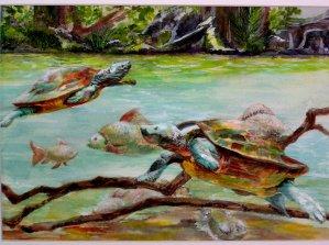 Turtles, watercolor 16x20