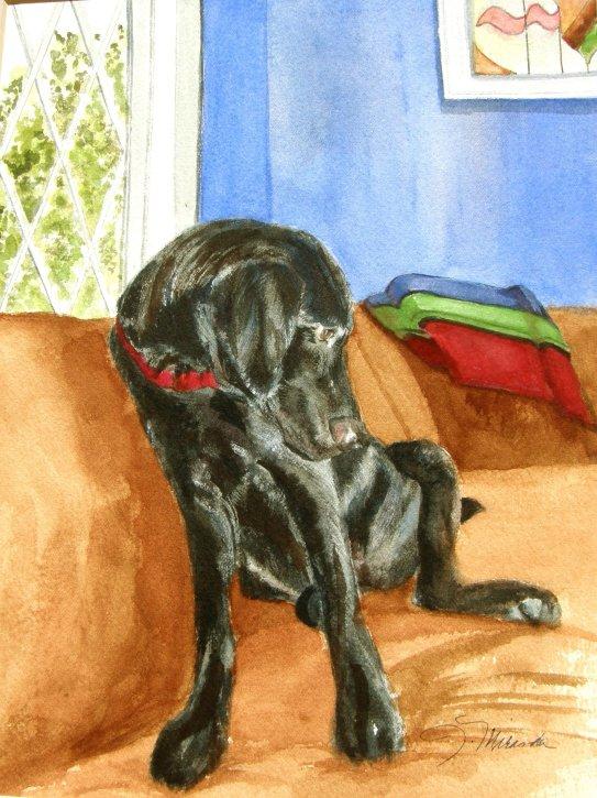 Barnum, watercolor 16x20
