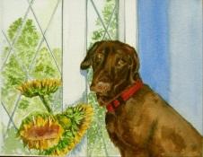 Bailey, watercolor, 16x20